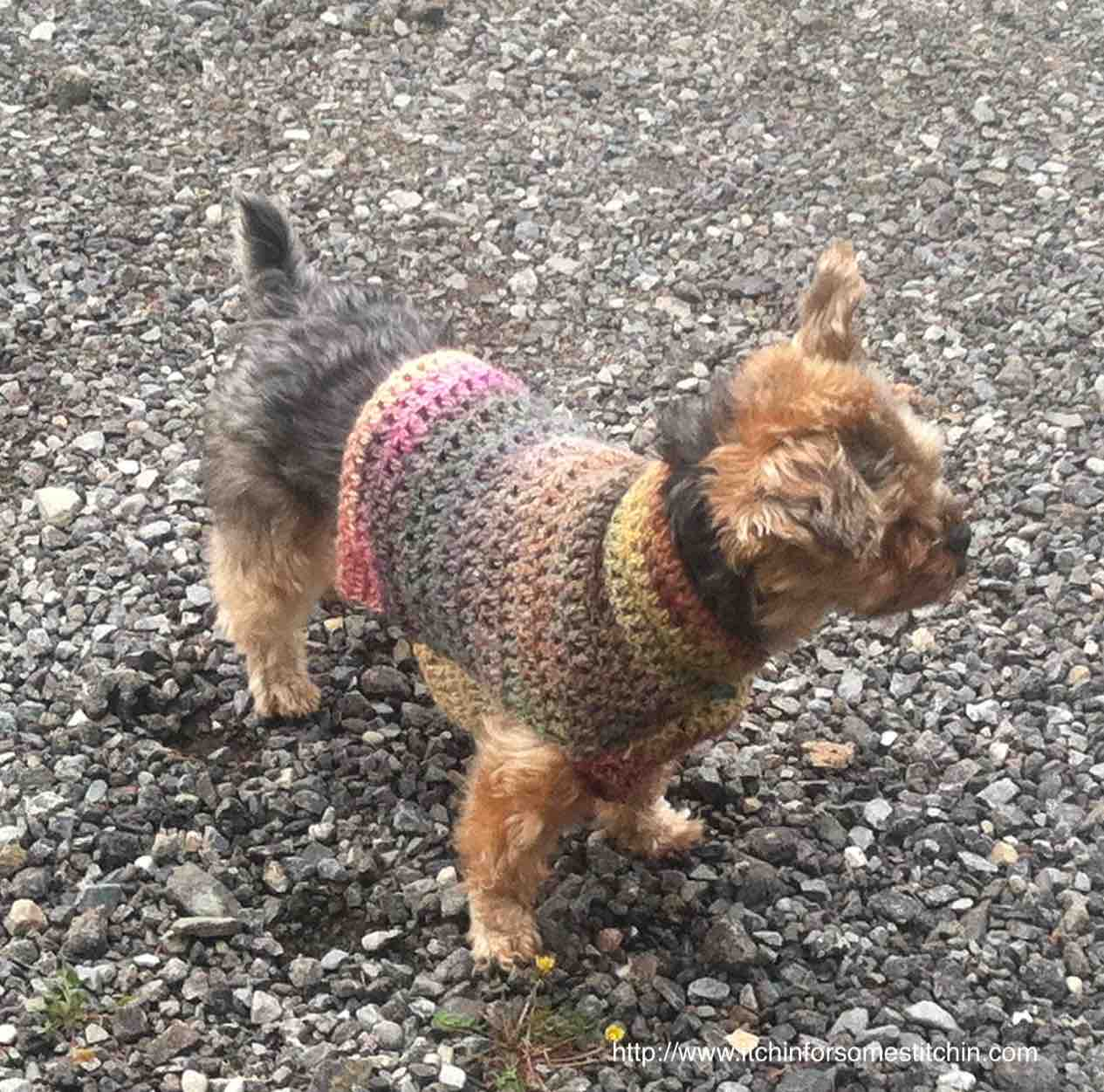 Quick Easy Small Dog Crochet Sweater Itchin For Some Stitchin