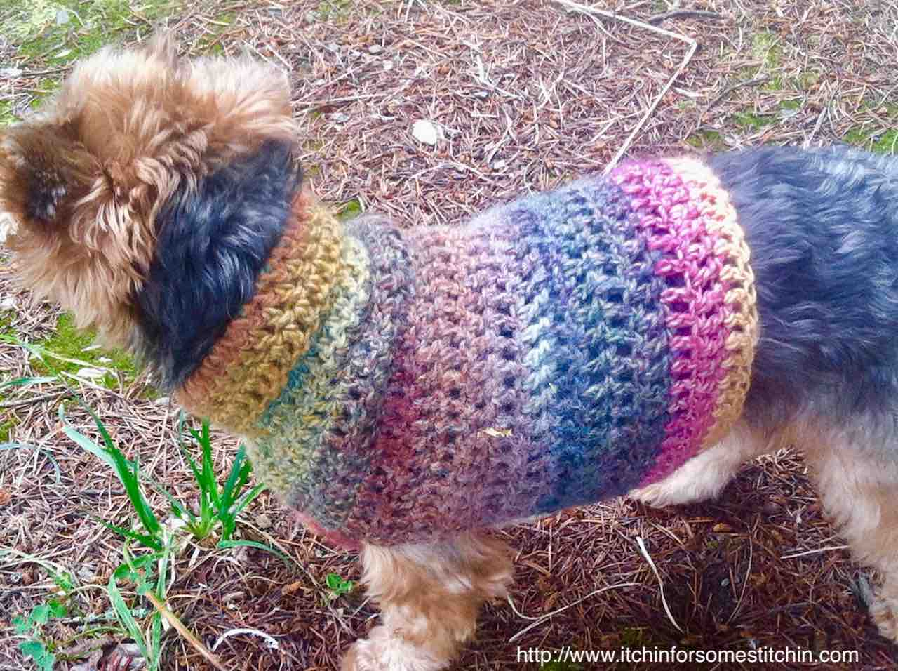 Quick and Easy Small Dog Sweater Pattern by http//www.itchinforsomestitchin.com