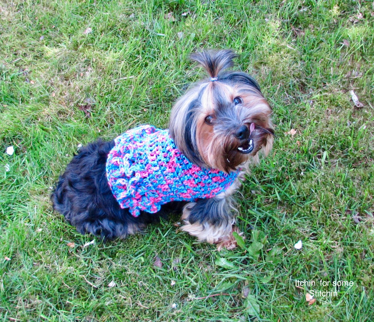 How To Crochet A Dog Sweater With Ruffles Itchin For Some Stitchin