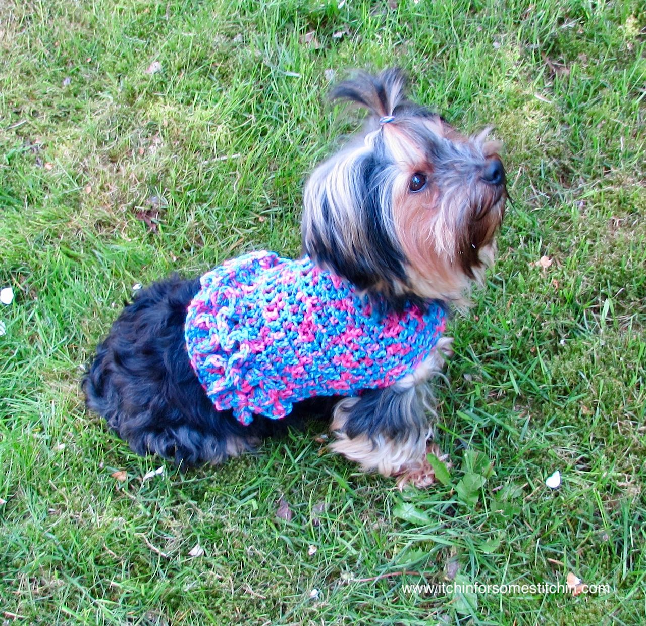 03e104f3d97a Years ago I designed a small dog sweater for my little boy Yorkshire  Terriers. I have two of them, Jack & Jake. Then a few years later came  Vanessa, ...