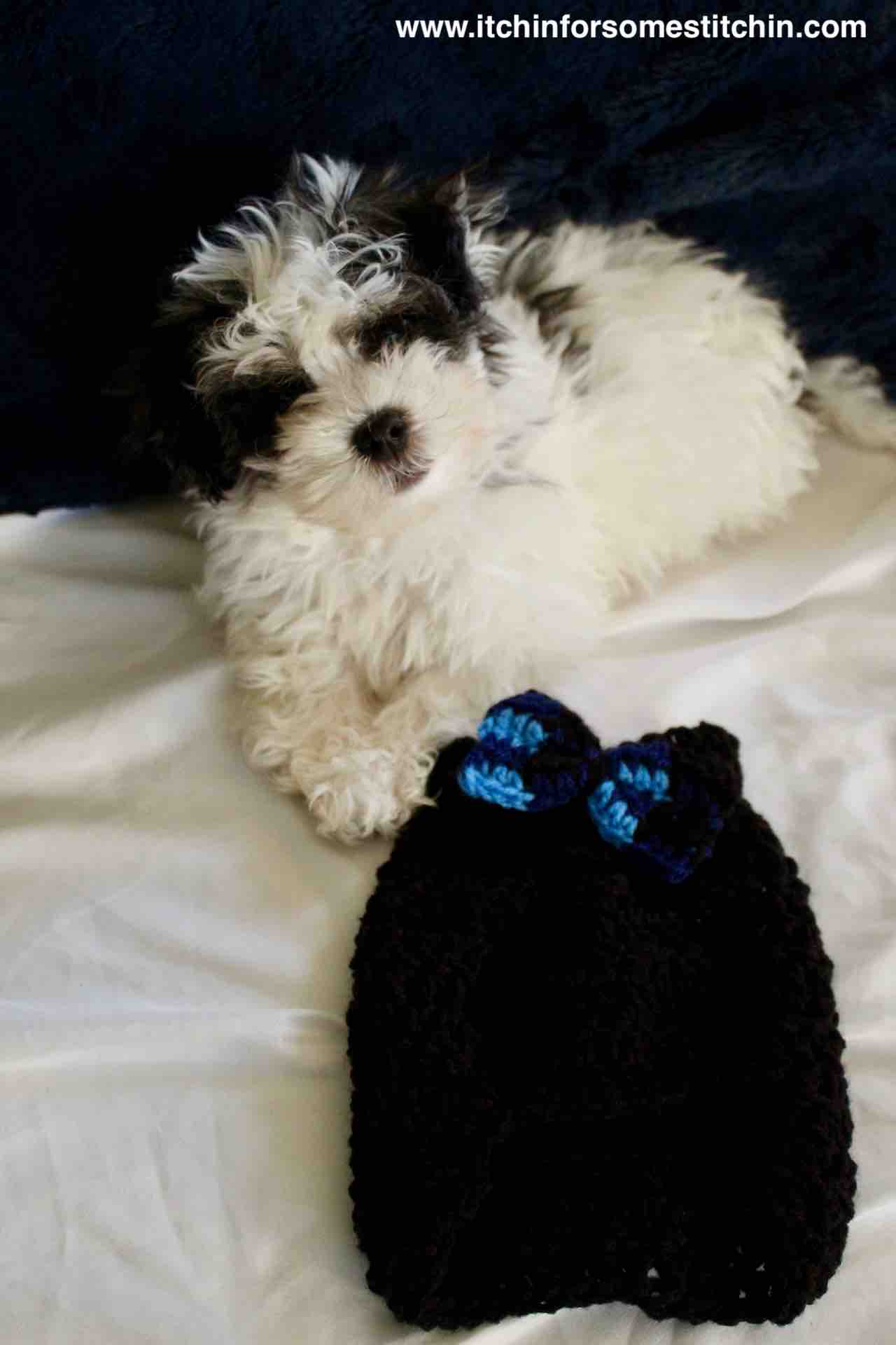Quick And Easy Crochet Dog Sweater Pattern For Puppies Itchin For