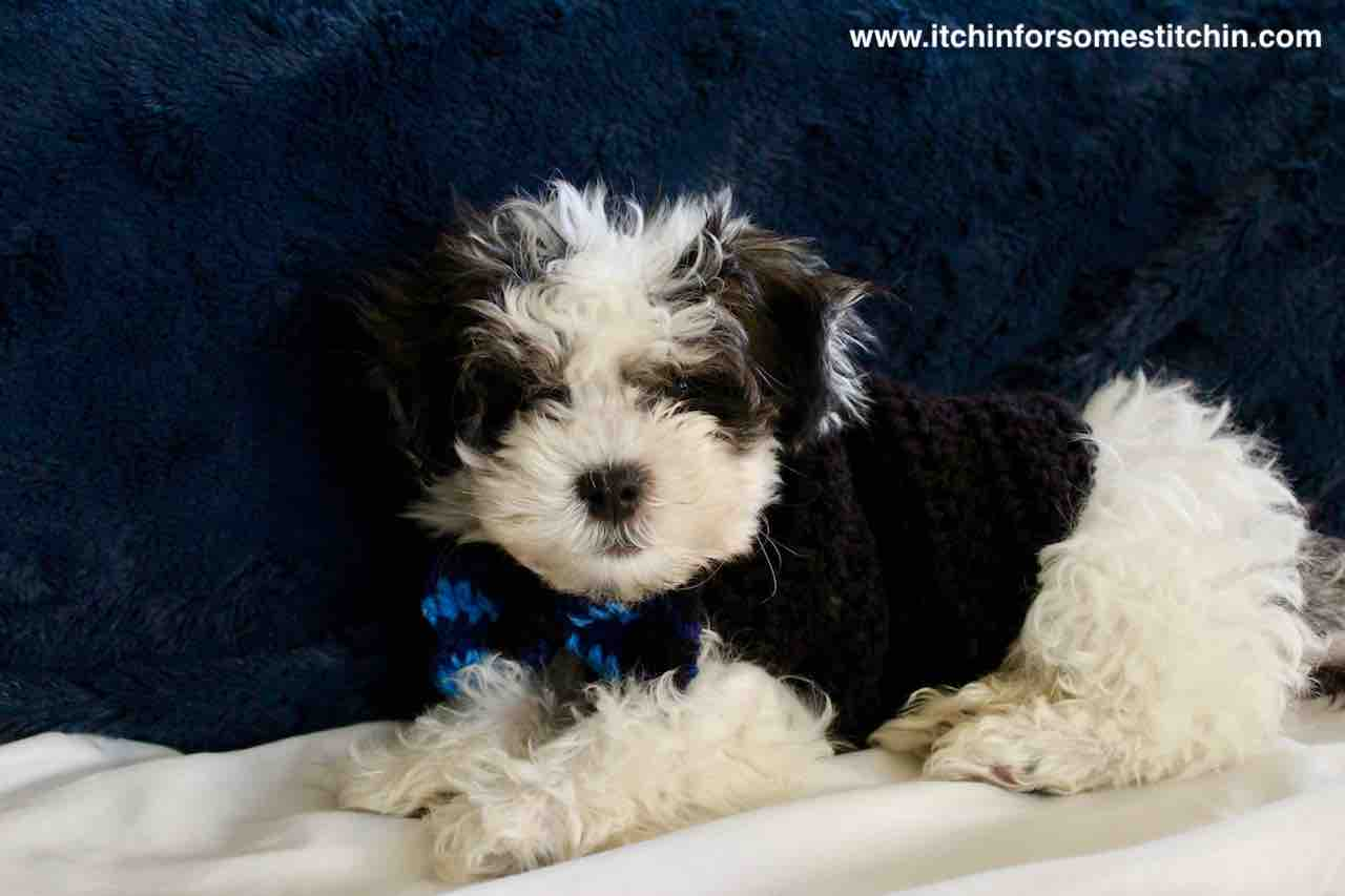 Quick and Easy Crochet Dog Sweater Pattern for Puppies