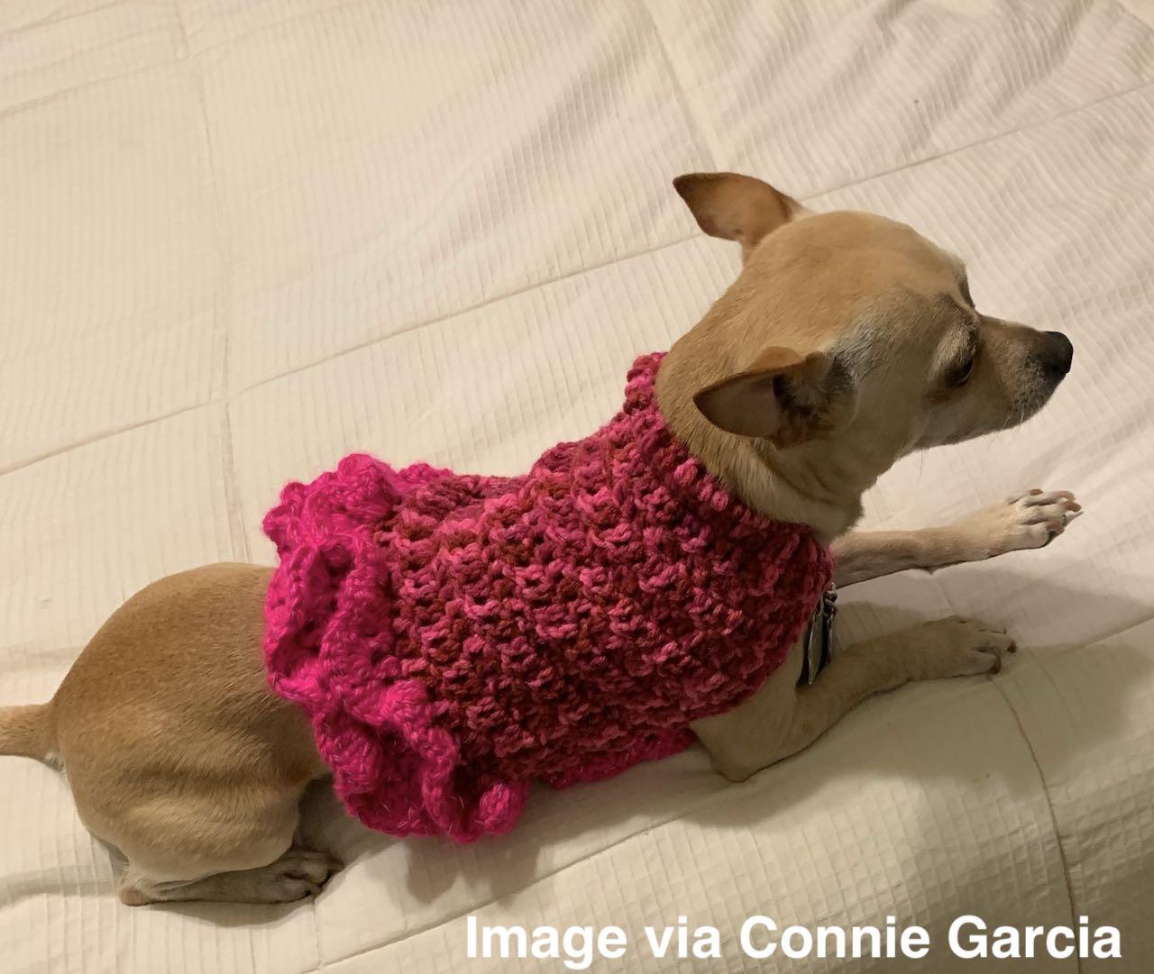 Small Dog Sweater Free Crochet Pattern Itchin For Some Stitchin