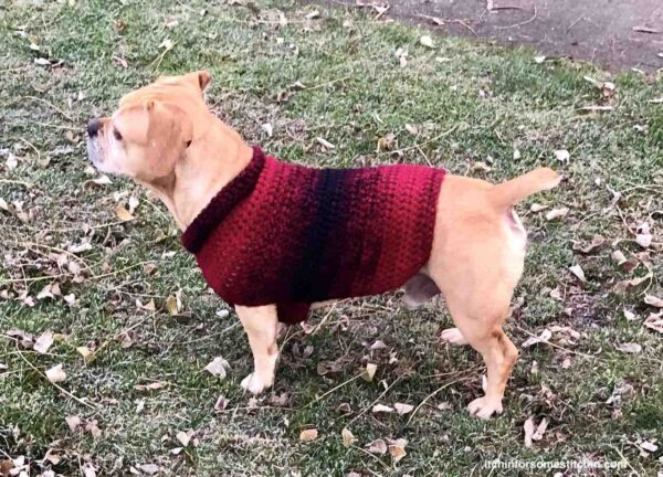 Crochet Dog Sweater Pattern by itchinforsomestitchin.com