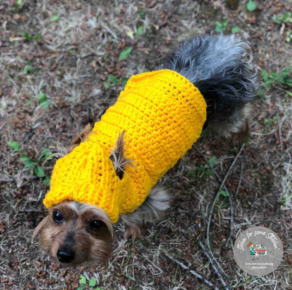 Small Dog Hooded Sweater pattern by itchinforsomestitchin.com