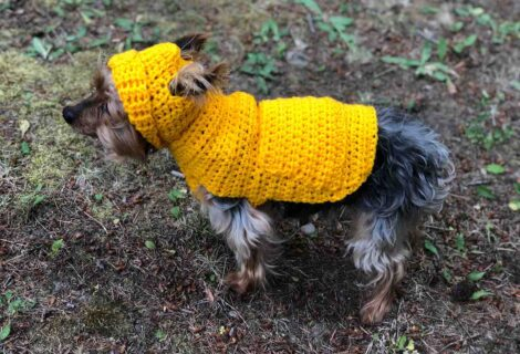 Small Dog Hoodie Sweater Pattern by itchinforsomestitchin.com
