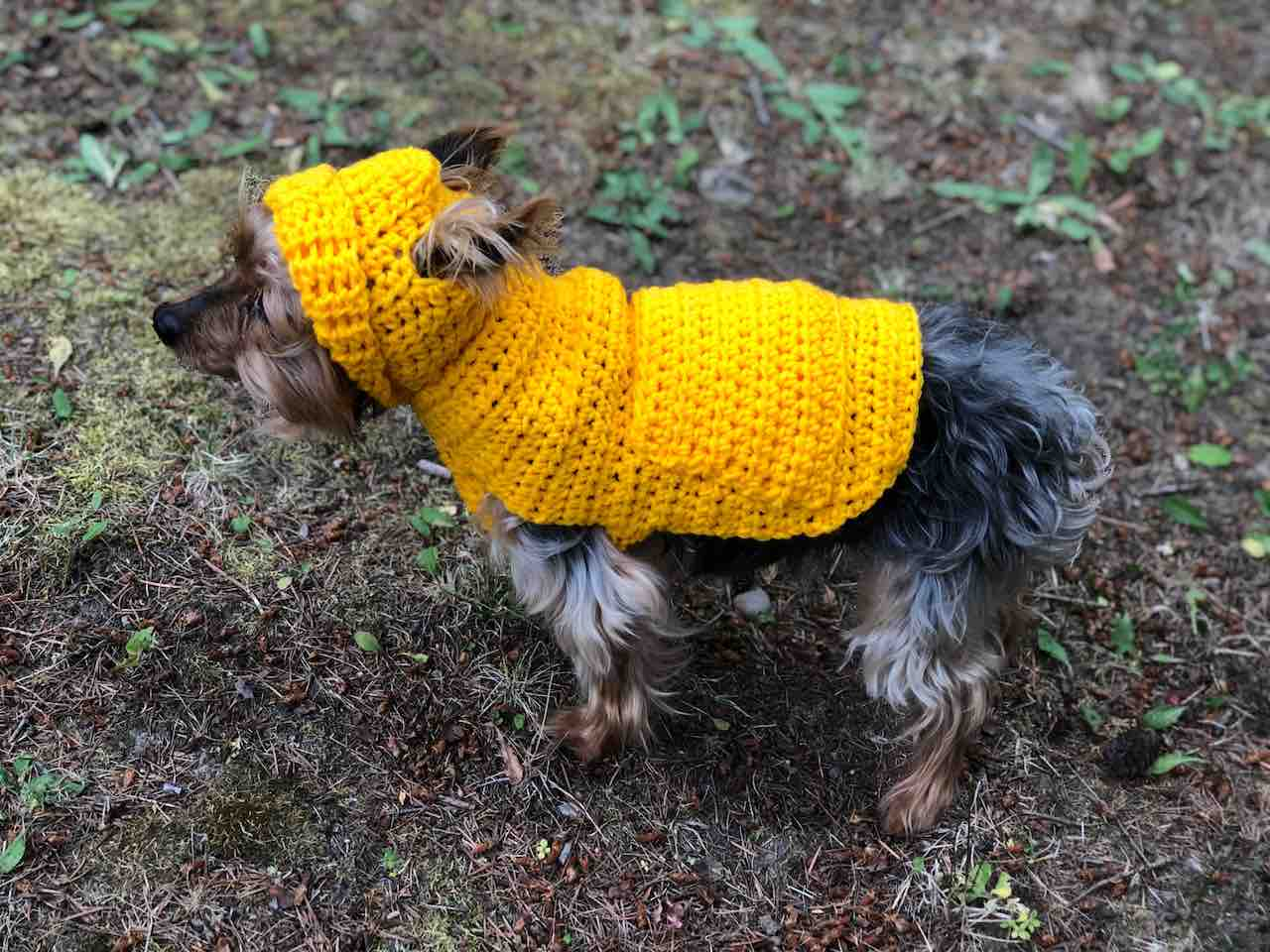 Small Dog Hoodie Sweater Itchin For Some Stitchin
